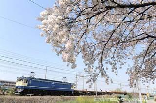 春の武蔵野線を行く国鉄色EF65